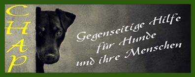 hundediebstahl täter organisiert