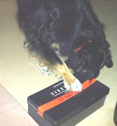 www hunde spiele